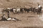 Branding cattle: Detail